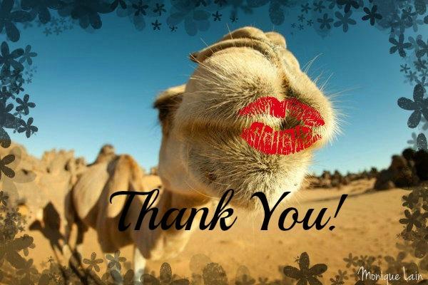 camel kiss1
