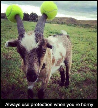 goat lol